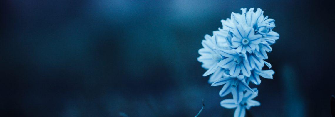 National Redress Banner_Blue Flower